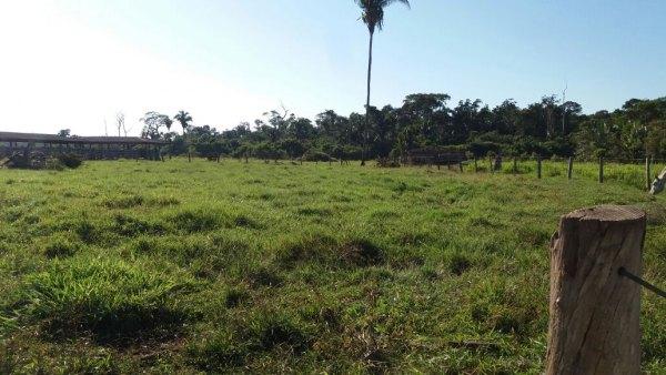 Vendo fazenda formada c/ 400 hectares