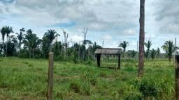 Ótima fazenda na BR 319 sentido Humaitá raio de 35 Km de PVH