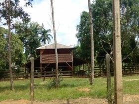 VEendo área rural na BR 319 C/ 100 Hectares