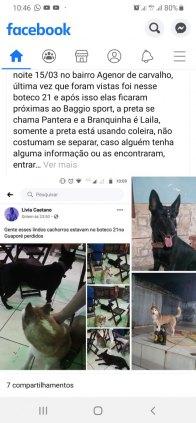 Cachorras desaparecidas