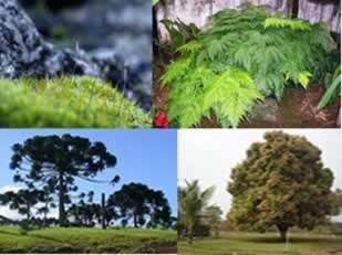 Caderno de Questões: Biologia – Botânica