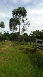 VENDO ÁREA RURAL NA REGIÃO DO AMAZONAS COM 250 HECTARES!