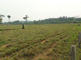 Vendo Fazenda com 600 Alqueires na Vila Triunfo- Itapuã do Oeste