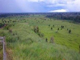 Vendo Fazenda com 3000 hectares na Br 319